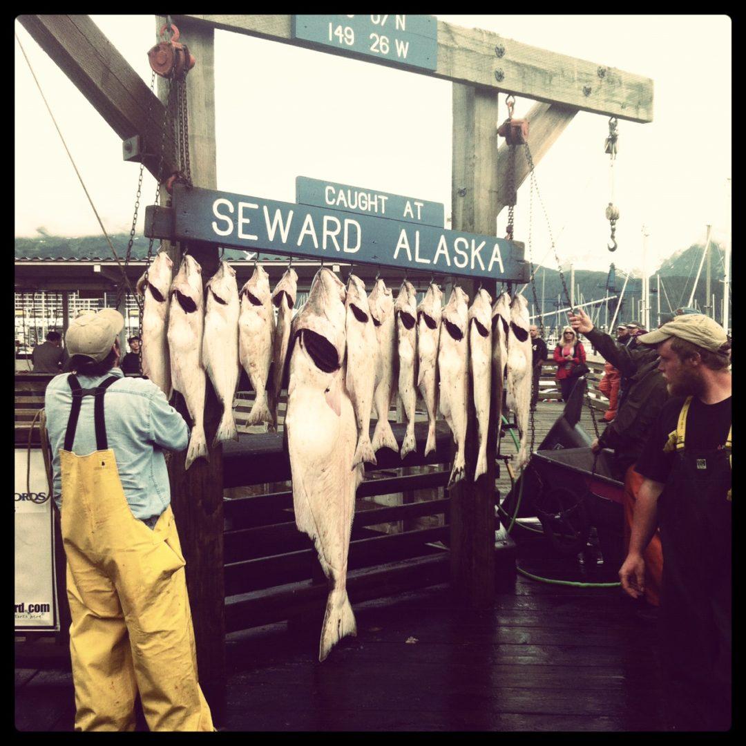 caccia grossa a Seward