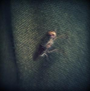 la mosca tsè tsè