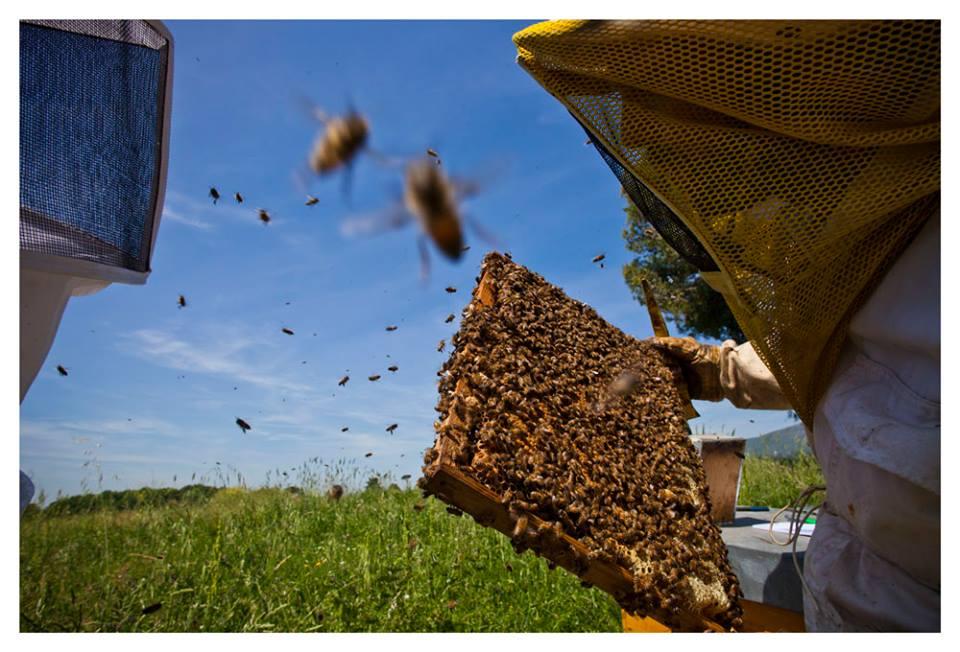bee-ing bee