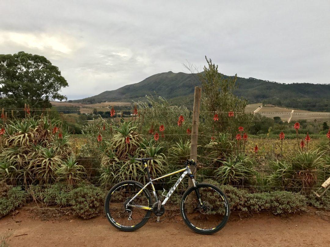 In bici nelle winelands